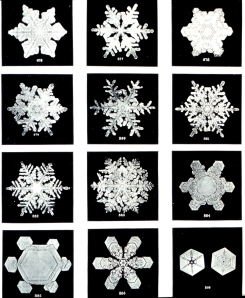Snowflakes courtesy of NOAA