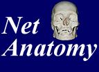 NetAnatomy