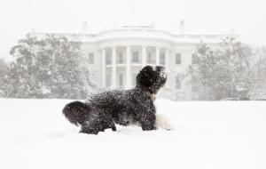 Bo plays in the snow